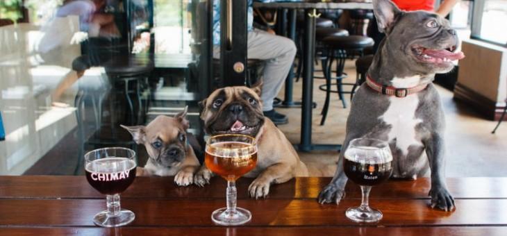 Dog Friendly Pubs & Restaurants in Edinburgh